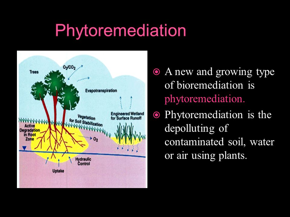 A new and growing type of bioremediation is phytoremediation.  Phytoremediation is the depolluting of contaminated soil, water or air using plants.