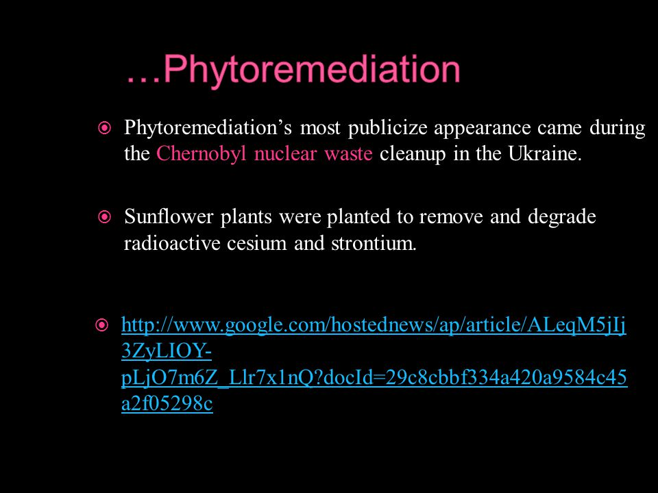  Phytoremediation's most publicize appearance came during the Chernobyl nuclear waste cleanup in the Ukraine.  Sunflower plants were planted to remo