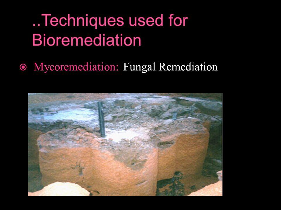  Mycoremediation: Fungal Remediation