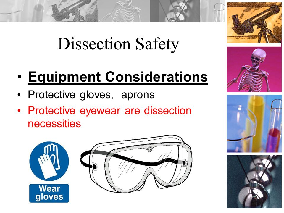 Dissection Safety Equipment Considerations Protective gloves, aprons Protective eyewear are dissection necessities