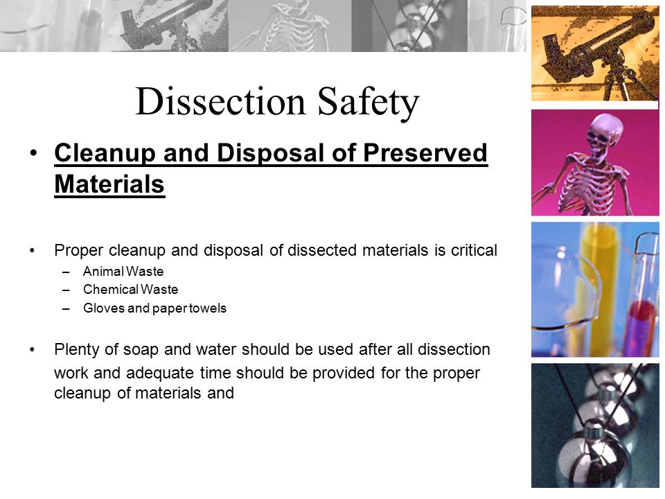 Dissection Safety Cleanup and Disposal of Preserved Materials Proper cleanup and disposal of dissected materials is critical –Animal Waste –Chemical W
