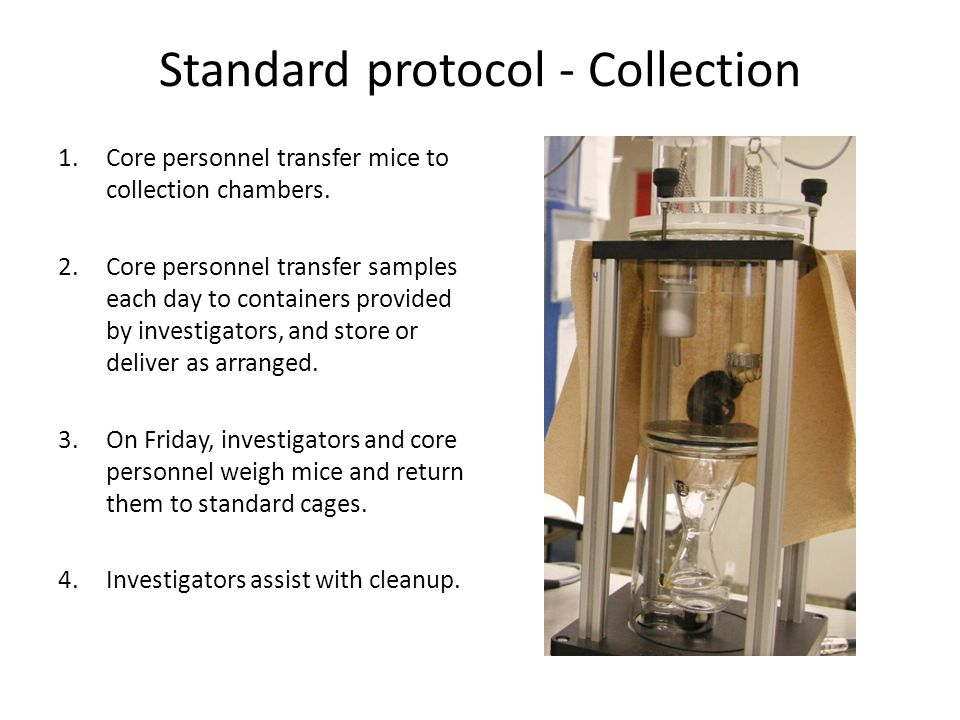 Standard protocol - Collection 1.Core personnel transfer mice to collection chambers.