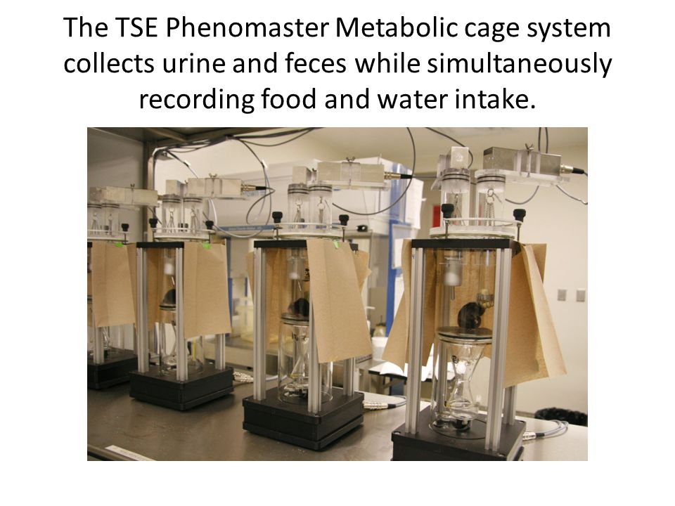 The TSE Phenomaster Metabolic cage system collects urine and feces while simultaneously recording food and water intake.