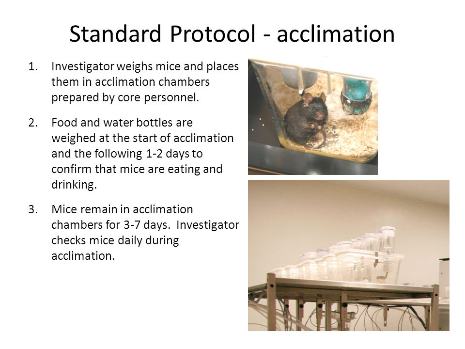 Standard Protocol - acclimation 1.Investigator weighs mice and places them in acclimation chambers prepared by core personnel.