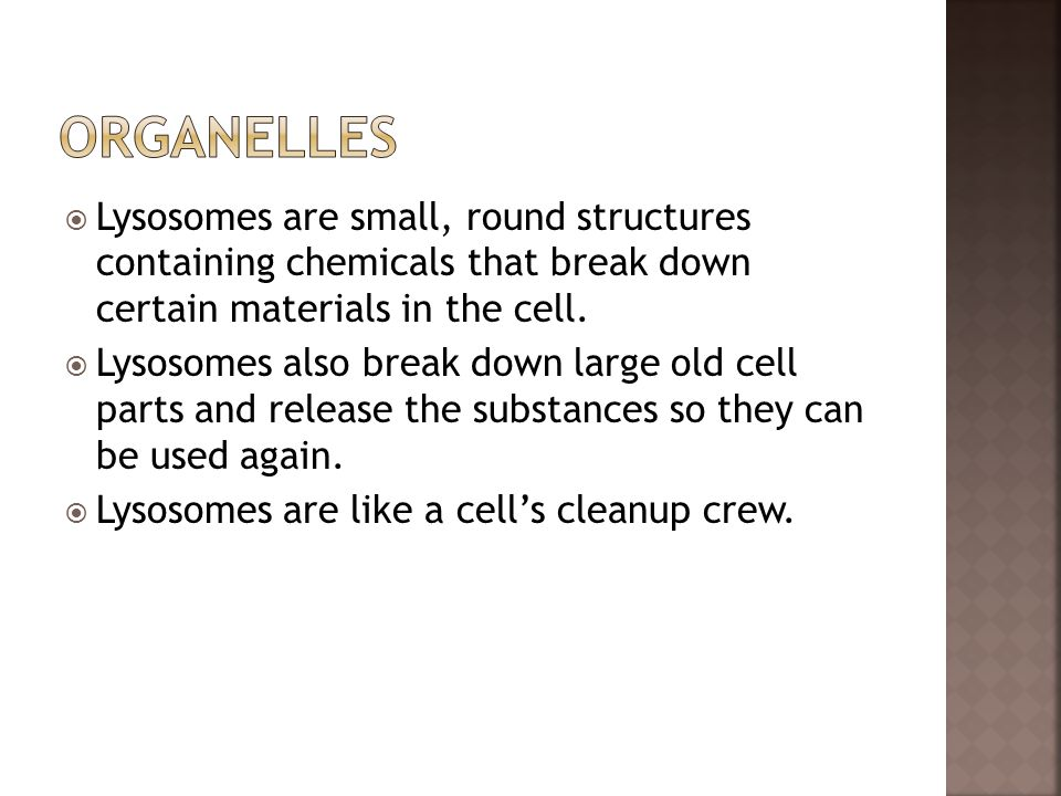  Lysosomes are small, round structures containing chemicals that break down certain materials in the cell.  Lysosomes also break down large old cell