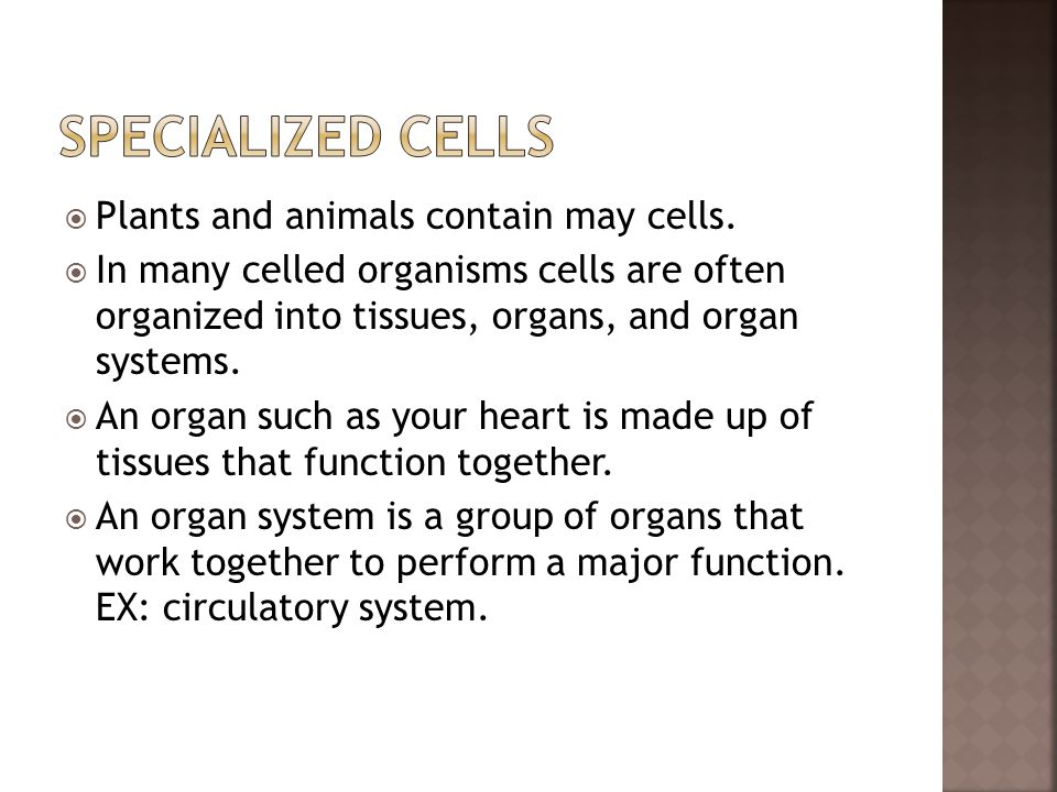  Plants and animals contain may cells.  In many celled organisms cells are often organized into tissues, organs, and organ systems.  An organ such