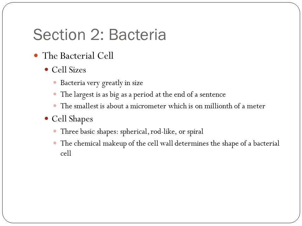 Section 2: Bacteria The Bacterial Cell Cell Sizes Bacteria very greatly in size The largest is as big as a period at the end of a sentence The smallest is about a micrometer which is on millionth of a meter Cell Shapes Three basic shapes: spherical, rod-like, or spiral The chemical makeup of the cell wall determines the shape of a bacterial cell