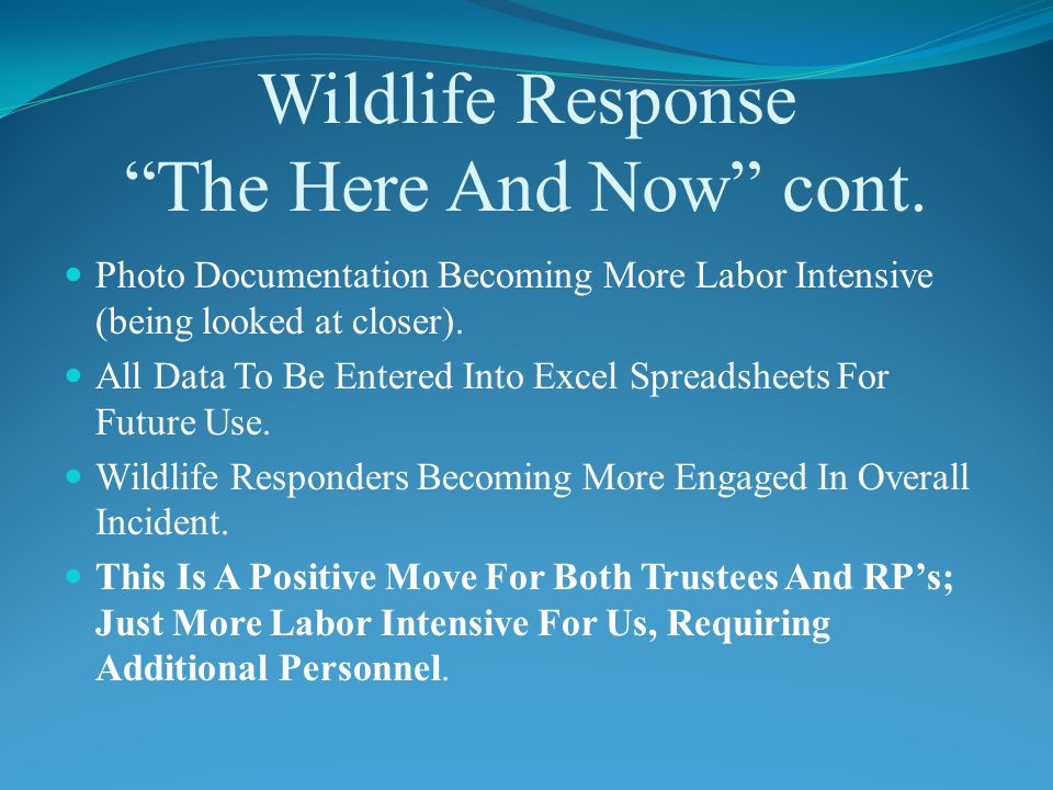Wildlife Response The Here And Now cont.