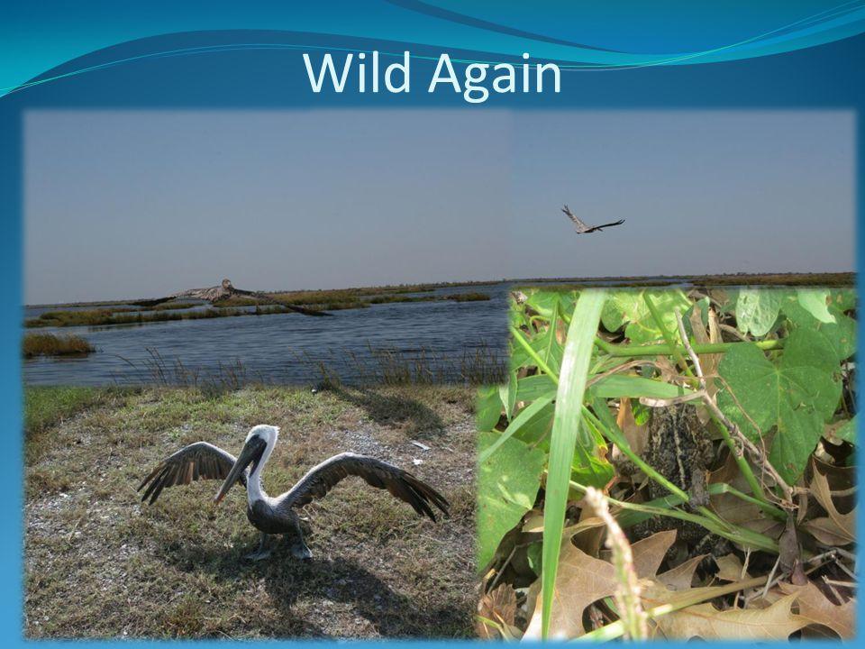 Wild Again