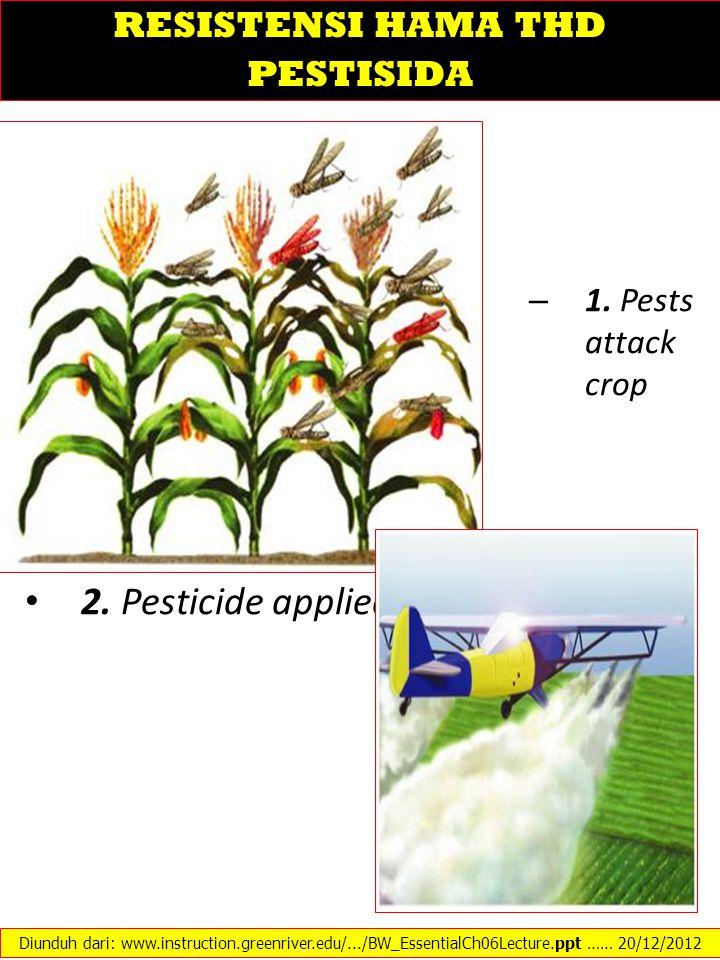– 1. Pests attack crop 2. Pesticide applied Diunduh dari: www.instruction.greenriver.edu/.../BW_EssentialCh06Lecture.ppt …… 20/12/2012 RESISTENSI HAMA