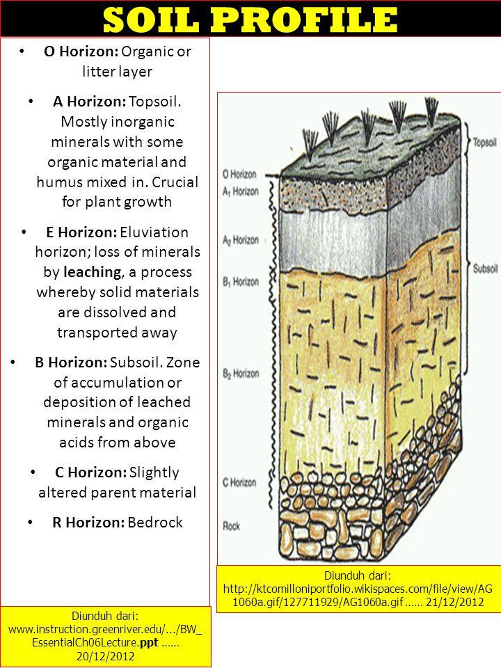 Planting along contour lines of slopes helps reduce erosion on hillsides.