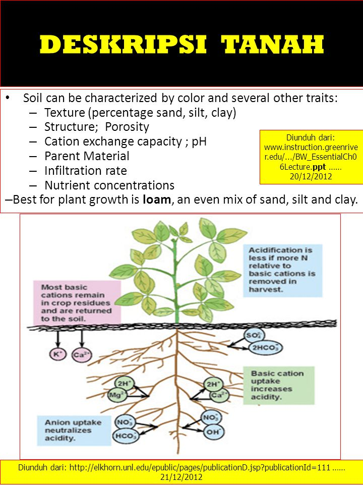 DESKRIPSI TANAH Soil can be characterized by color and several other traits: – Texture (percentage sand, silt, clay) – Structure; Porosity – Cation ex