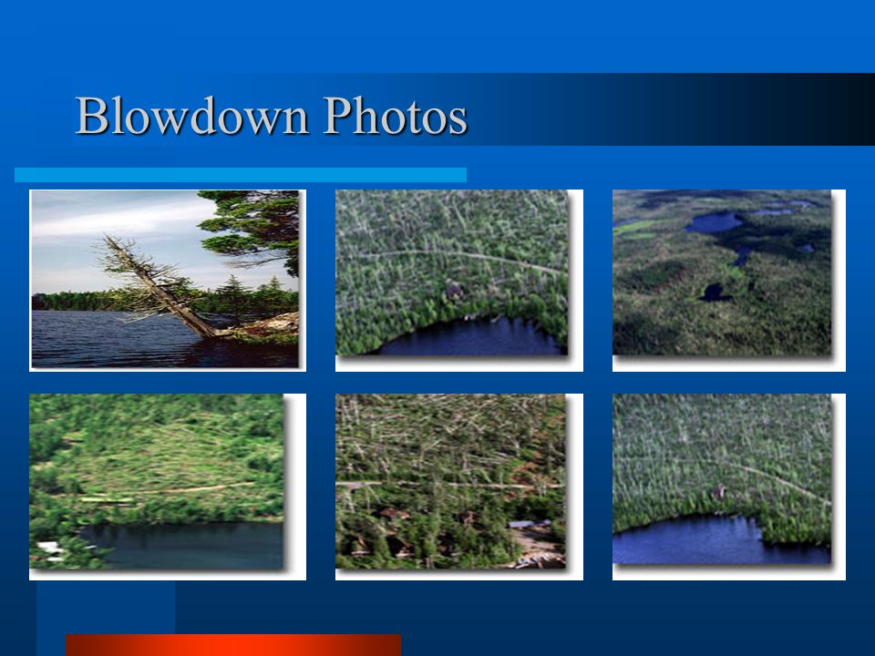 Blowdown Photos