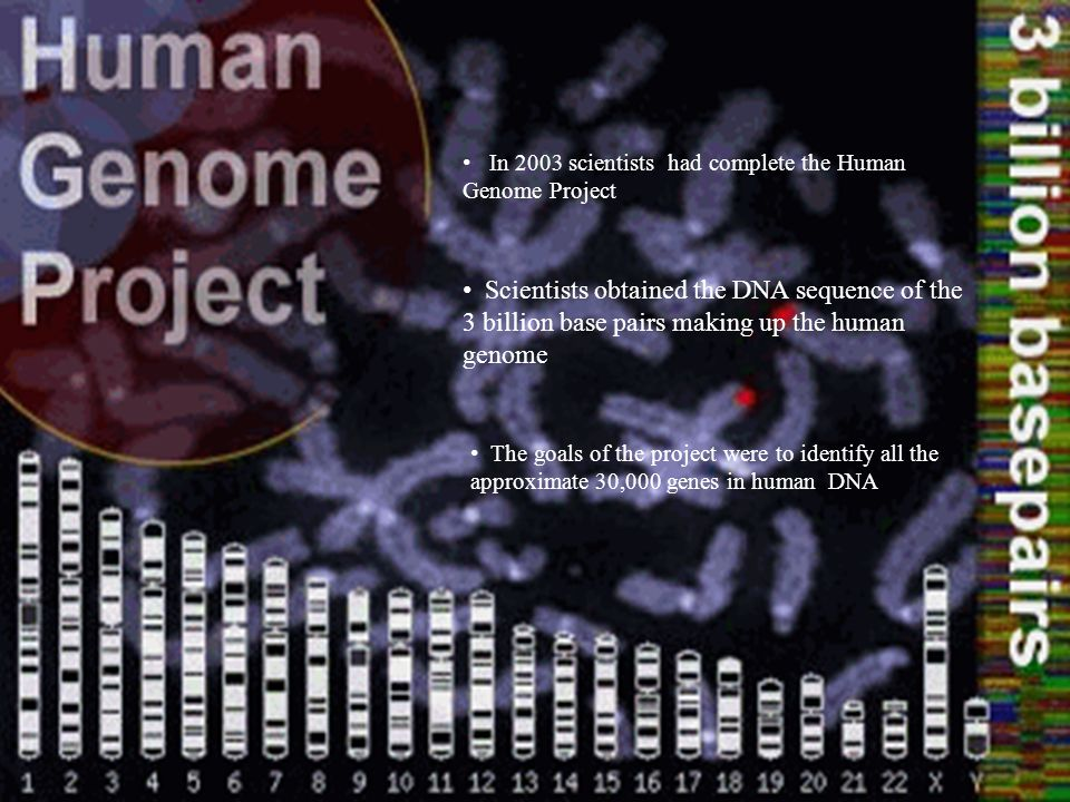 In 2003 scientists had complete the Human Genome Project The goals of the project were to identify all the approximate 30,000 genes in human DNA Scientists obtained the DNA sequence of the 3 billion base pairs making up the human genome