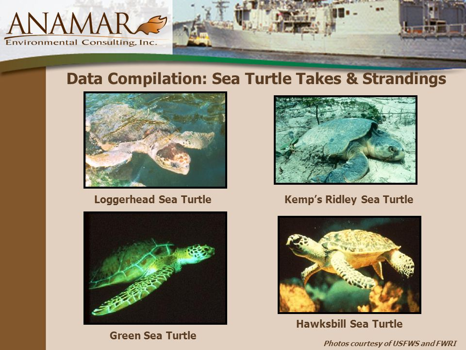 Data Compilation: Sea Turtle Takes & Strandings Loggerhead Sea TurtleKemp's Ridley Sea Turtle Green Sea Turtle Hawksbill Sea Turtle Photos courtesy of USFWS and FWRI