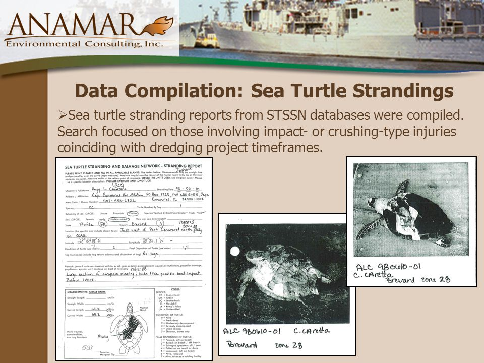 Data Compilation: Sea Turtle Strandings  Sea turtle stranding reports from STSSN databases were compiled.