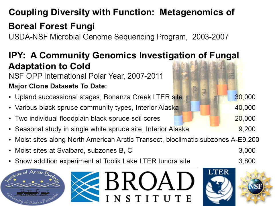 Coupling Diversity with Function: Metagenomics of Boreal Forest Fungi USDA-NSF Microbial Genome Sequencing Program, 2003-2007 IPY: A Community Genomics Investigation of Fungal Adaptation to Cold NSF OPP International Polar Year, 2007-2011 Major Clone Datasets To Date: Upland successional stages, Bonanza Creek LTER site30,000 Various black spruce community types, Interior Alaska40,000 Two individual floodplain black spruce soil cores20,000 Seasonal study in single white spruce site, Interior Alaska9,200 Moist sites along North American Arctic Transect, bioclimatic subzones A-E9,200 Moist sites at Svalbard, subzones B, C3,000 Snow addition experiment at Toolik Lake LTER tundra site3,800