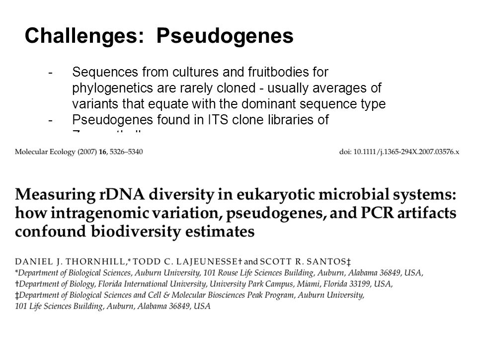 Challenges: Pseudogenes -Sequences from cultures and fruitbodies for phylogenetics are rarely cloned - usually averages of variants that equate with the dominant sequence type -Pseudogenes found in ITS clone libraries of Zooxanthellae
