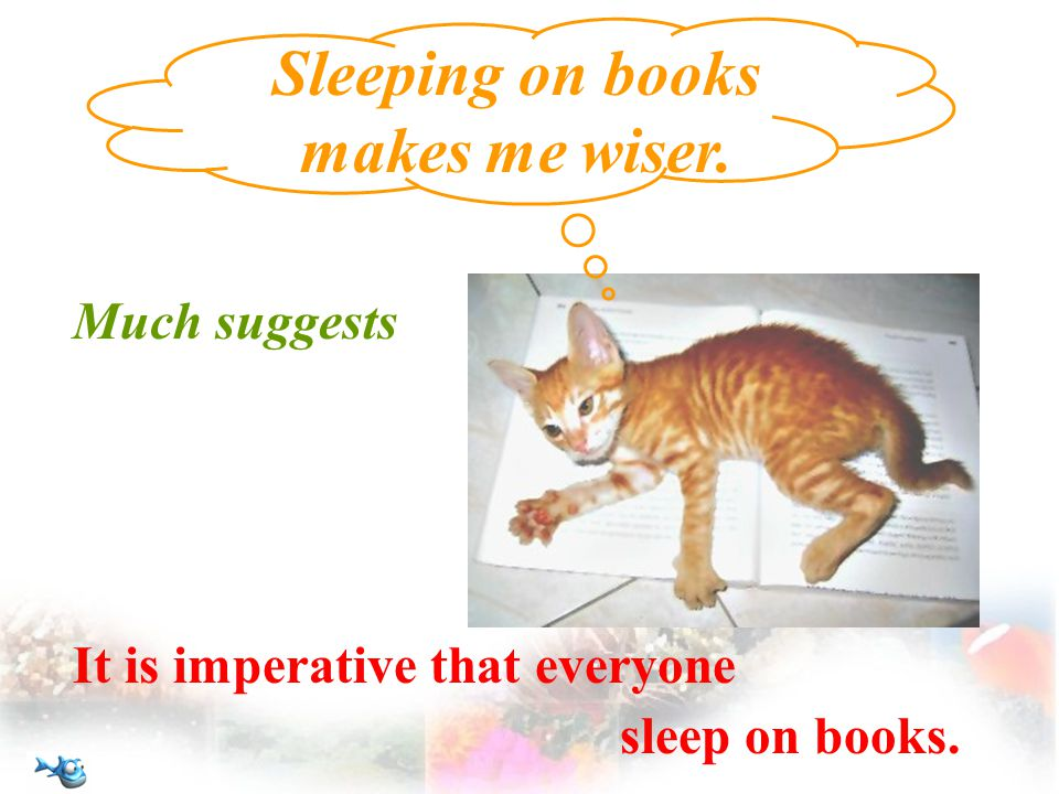 Much suggests Sleeping on books makes me wiser. It is imperative that everyone sleep on books.