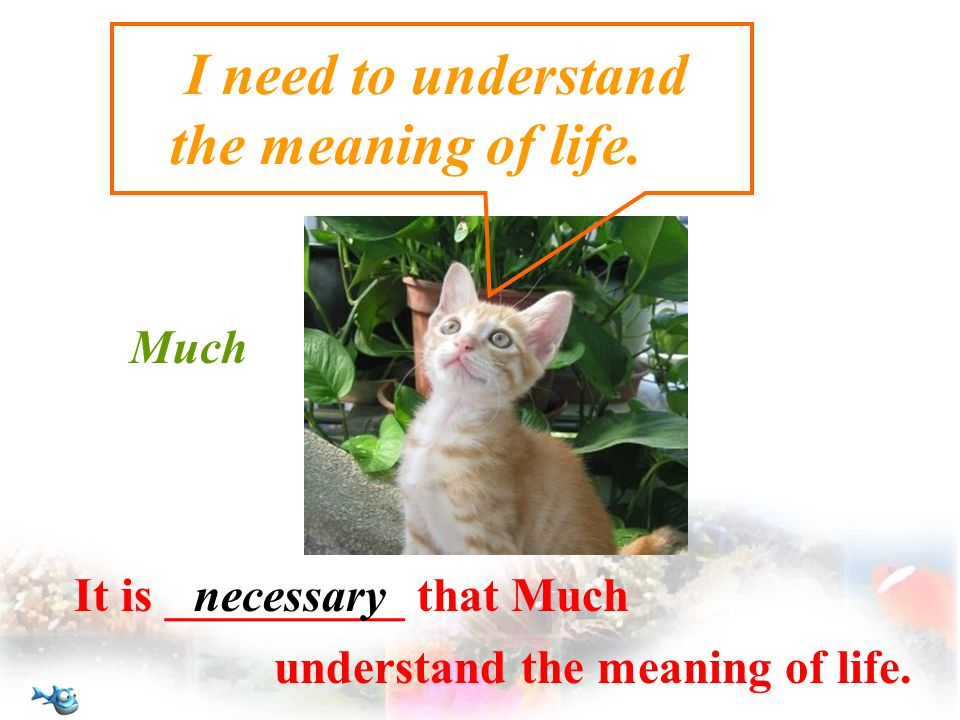 I need to understand the meaning of life.