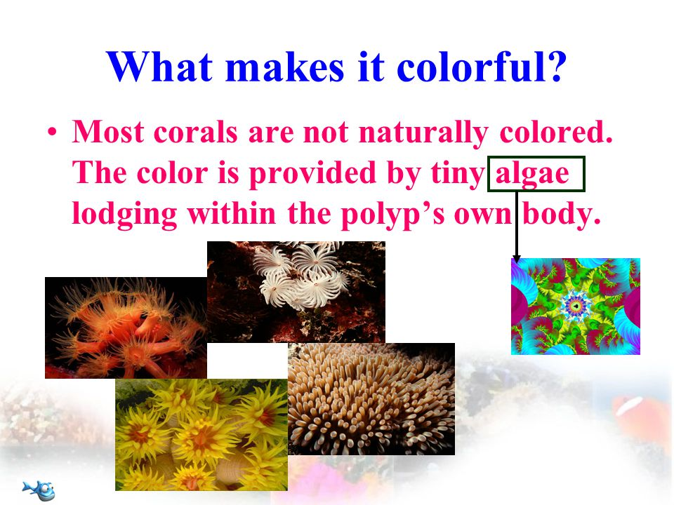 What makes it colorful. Most corals are not naturally colored.