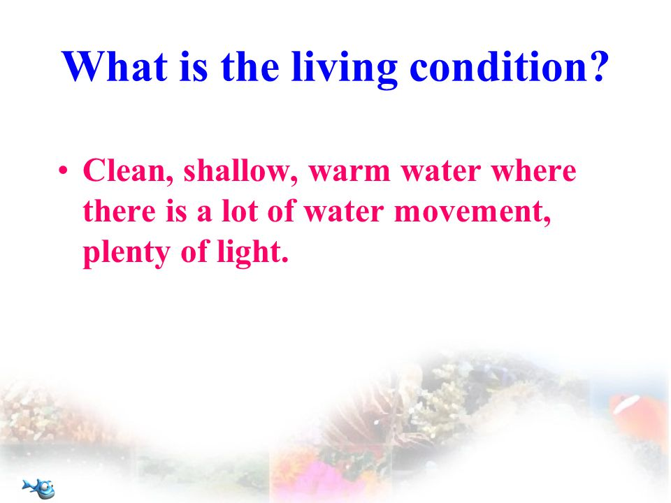 What is the living condition.