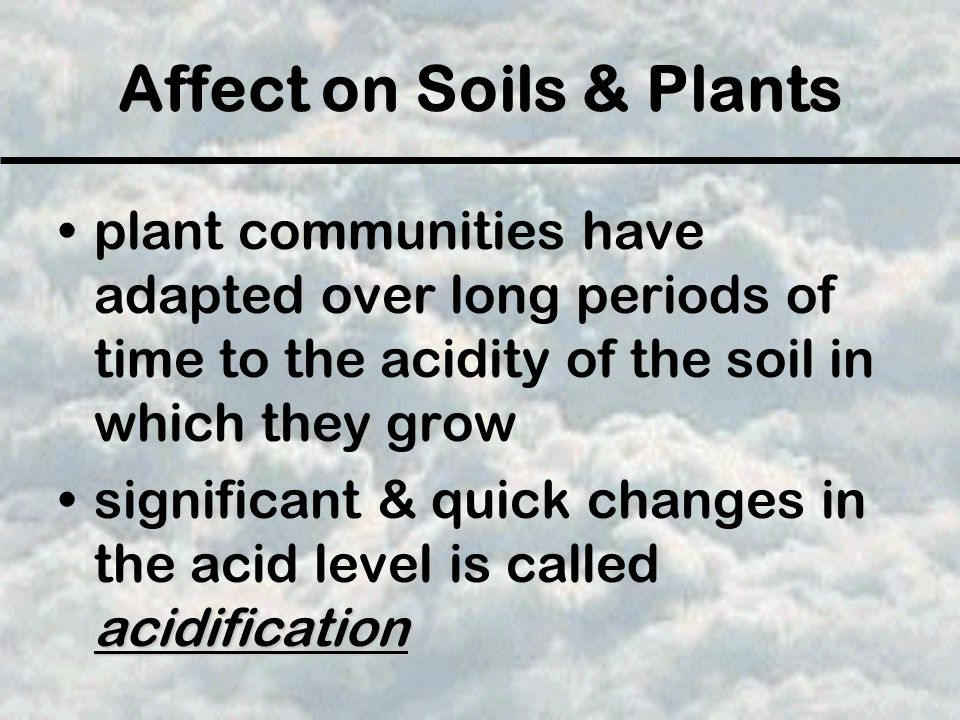 Affect on Soils & Plants plant communities have adapted over long periods of time to the acidity of the soil in which they grow acidificationsignifica