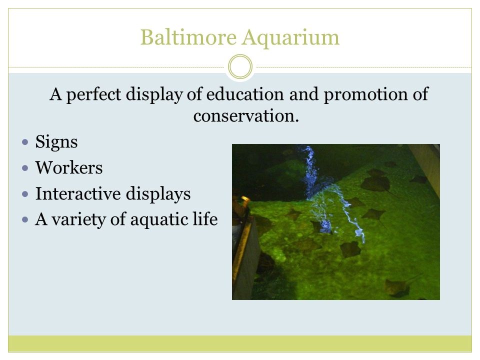 Baltimore Aquarium A perfect display of education and promotion of conservation.