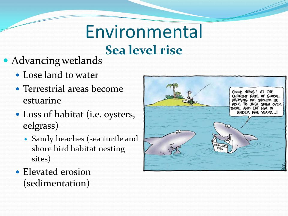 Environmental Advancing wetlands Lose land to water Terrestrial areas become estuarine Loss of habitat (i.e.