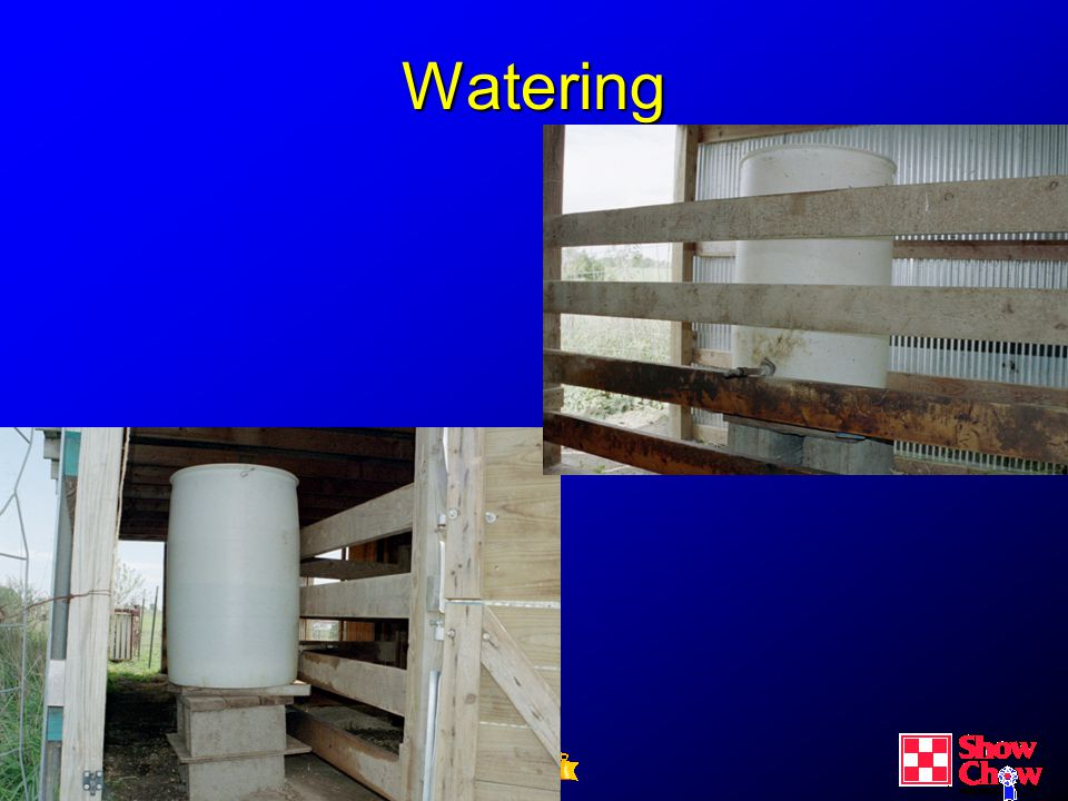 CE Building Confidence & Expertise Watering