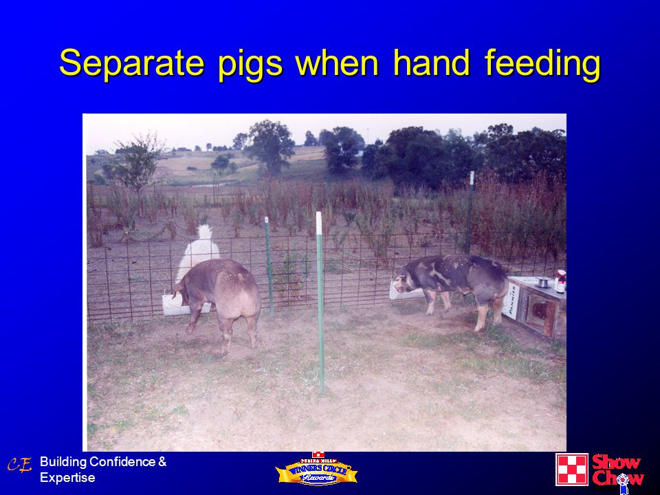 CE Building Confidence & Expertise Separate pigs when hand feeding