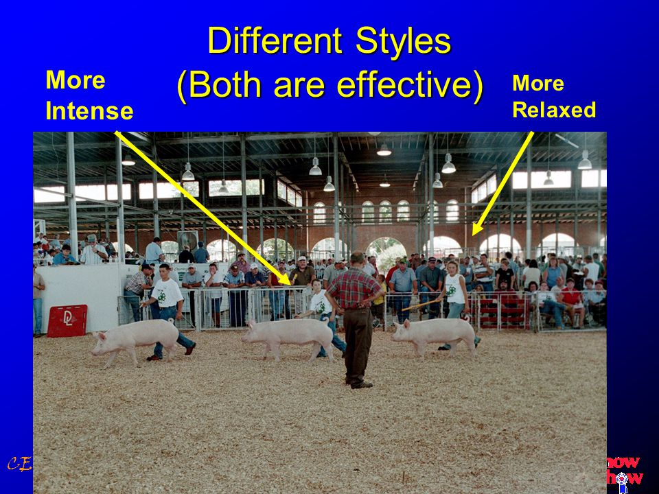 CE Building Confidence & Expertise Different Styles (Both are effective) More Intense More Relaxed