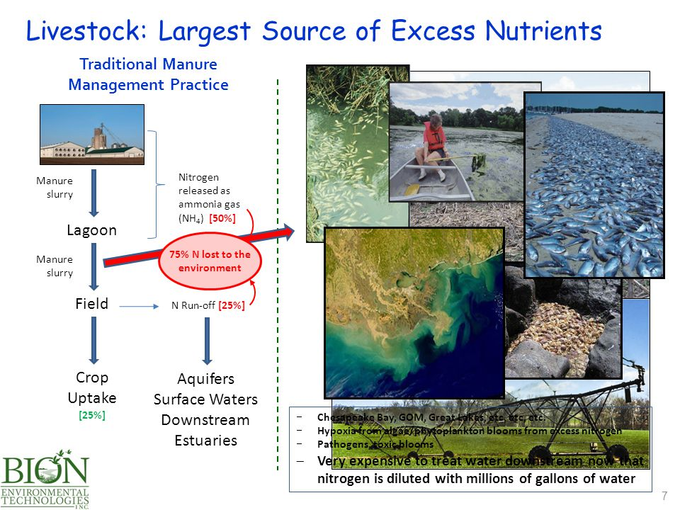 Lagoon Manure slurry Nitrogen released as ammonia gas (NH 4 ) [50%] Field Manure slurry N Run-off [25%] Crop Uptake [25%] Traditional Manure Management Practice Livestock: Largest Source of Excess Nutrients 7  Chesapeake Bay, GOM, Great Lakes, etc, etc, etc.