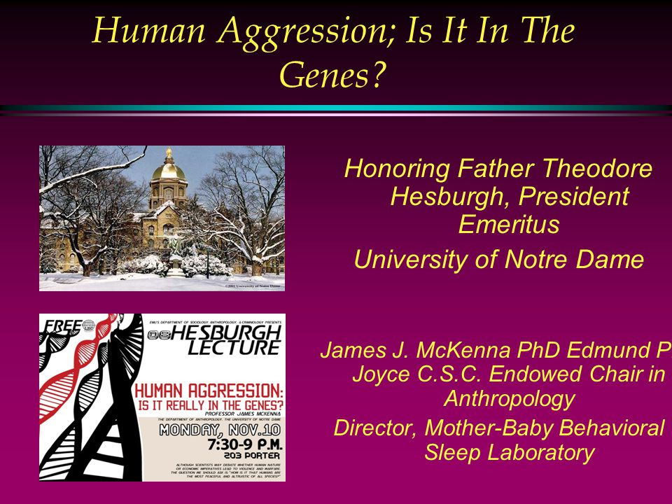 Human Aggression; Is It In The Genes.