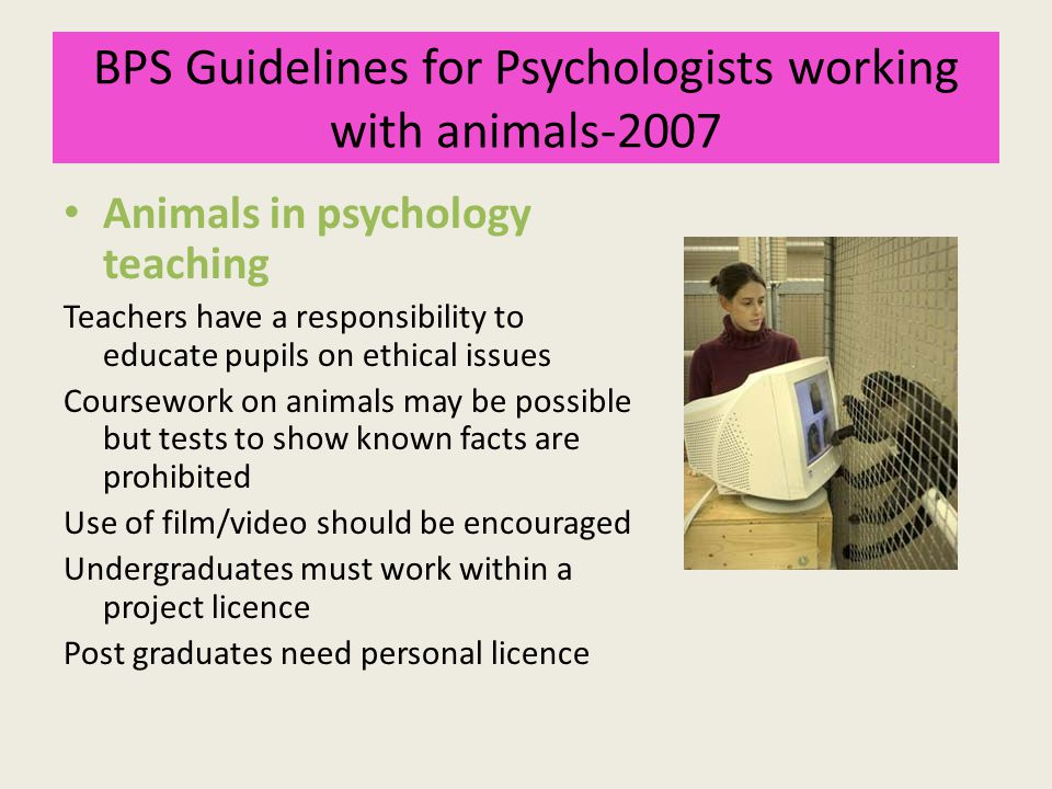 BPS Guidelines for Psychologists working with animals-2007 Animals in psychology teaching Teachers have a responsibility to educate pupils on ethical issues Coursework on animals may be possible but tests to show known facts are prohibited Use of film/video should be encouraged Undergraduates must work within a project licence Post graduates need personal licence