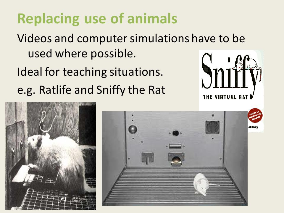 Replacing use of animals Videos and computer simulations have to be used where possible. Ideal for teaching situations. e.g. Ratlife and Sniffy the Ra