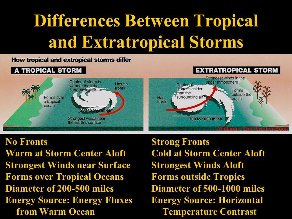 Strong Fronts Cold at Storm Center Aloft Strongest Winds Aloft Forms outside Tropics Diameter of 500-1000 miles Energy Source: Horizontal Temperature Contrast Differences Between Tropical and Extratropical Storms Williams, The Weather Book No Fronts Warm at Storm Center Aloft Strongest Winds near Surface Forms over Tropical Oceans Diameter of 200-500 miles Energy Source: Energy Fluxes from Warm Ocean