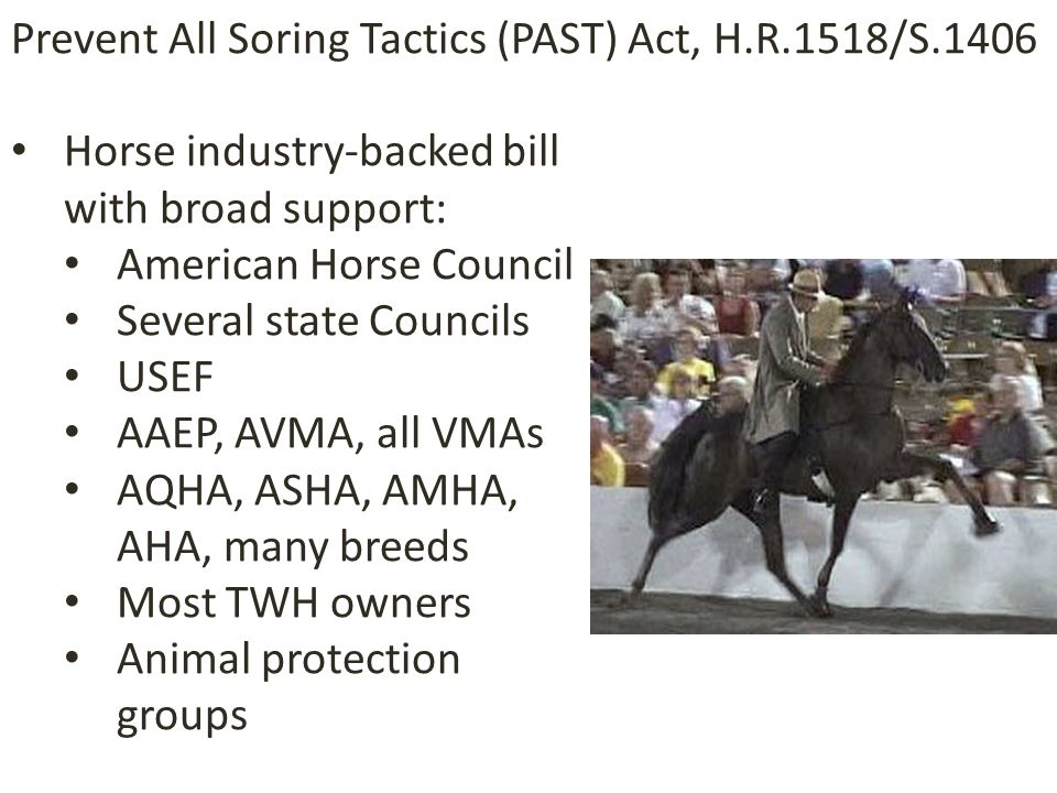 Horse industry-backed bill with broad support: American Horse Council Several state Councils USEF AAEP, AVMA, all VMAs AQHA, ASHA, AMHA, AHA, many breeds Most TWH owners Animal protection groups Prevent All Soring Tactics (PAST) Act, H.R.1518/S.1406