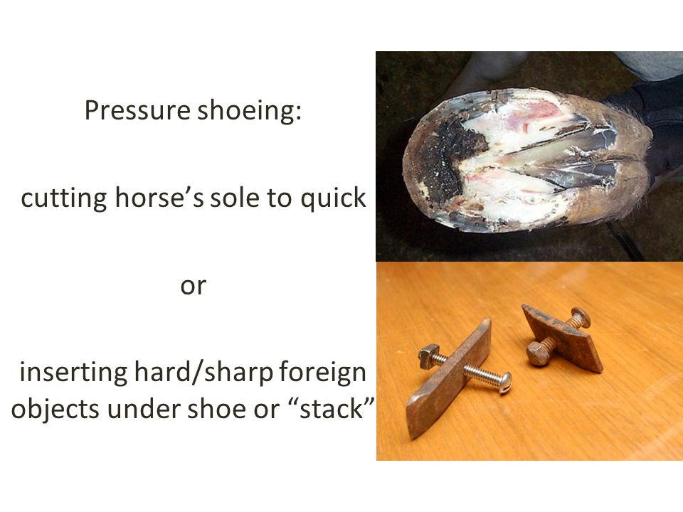 Pressure shoeing: cutting horse's sole to quick or inserting hard/sharp foreign objects under shoe or stack
