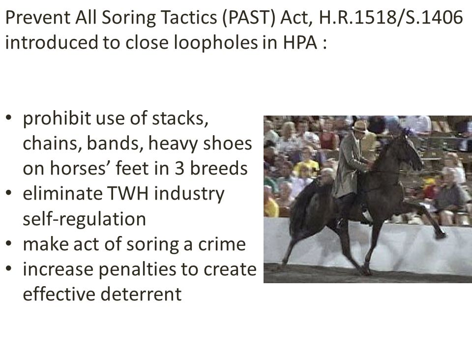prohibit use of stacks, chains, bands, heavy shoes on horses' feet in 3 breeds eliminate TWH industry self-regulation make act of soring a crime increase penalties to create effective deterrent Prevent All Soring Tactics (PAST) Act, H.R.1518/S.1406 introduced to close loopholes in HPA :