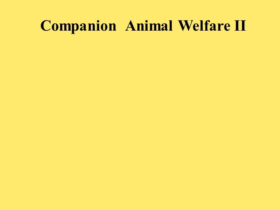 Companion Animal Welfare II