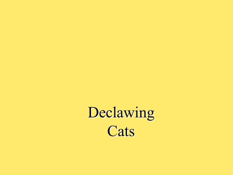 Declawing Cats Cats