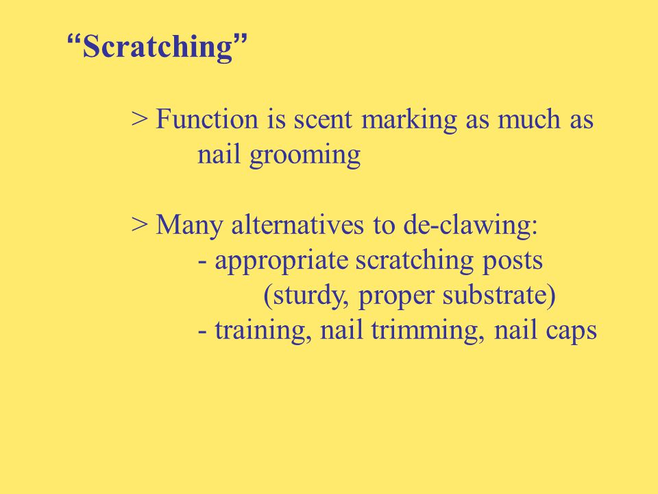 Scratching > Function is scent marking as much as nail grooming > Many alternatives to de-clawing: - appropriate scratching posts (sturdy, proper substrate) - training, nail trimming, nail caps