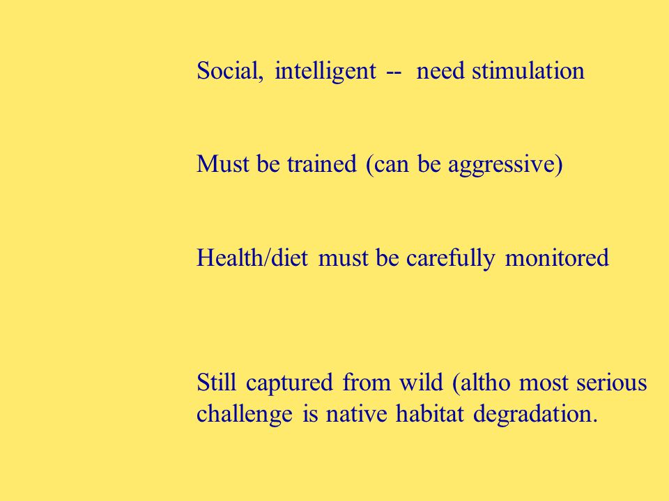 Social, intelligent -- need stimulation Must be trained (can be aggressive) Health/diet must be carefully monitored Still captured from wild (altho most serious challenge is native habitat degradation.