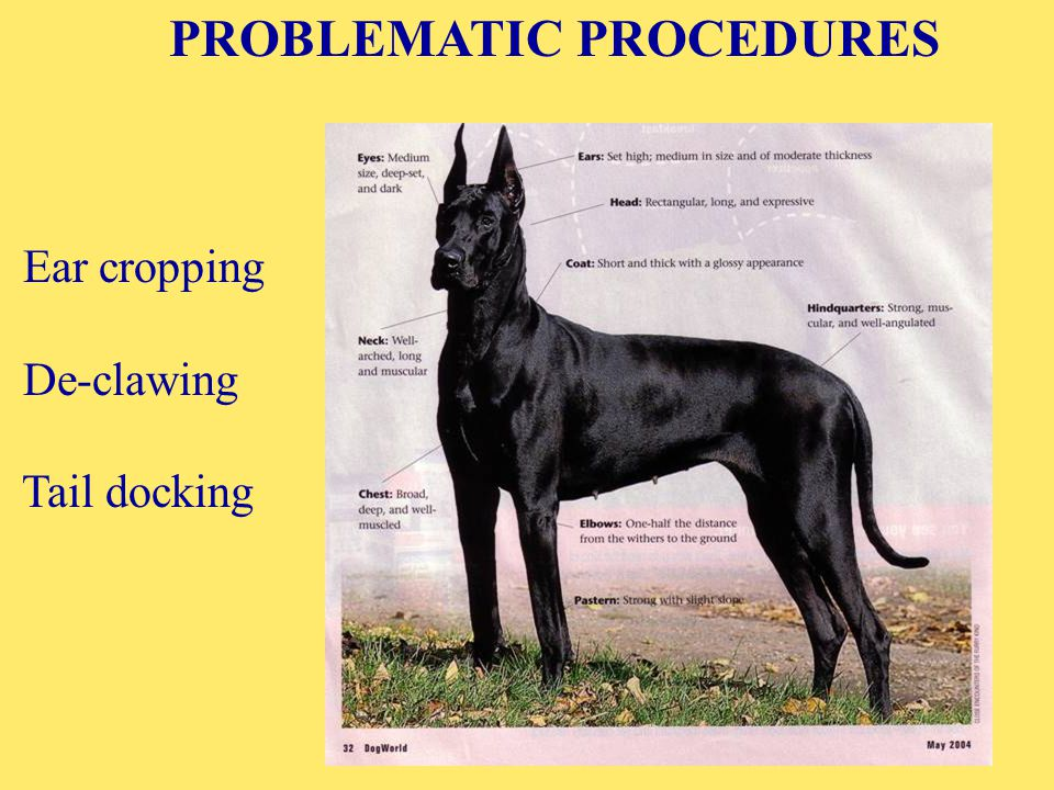 PROBLEMATIC PROCEDURES Ear cropping De-clawing Tail docking