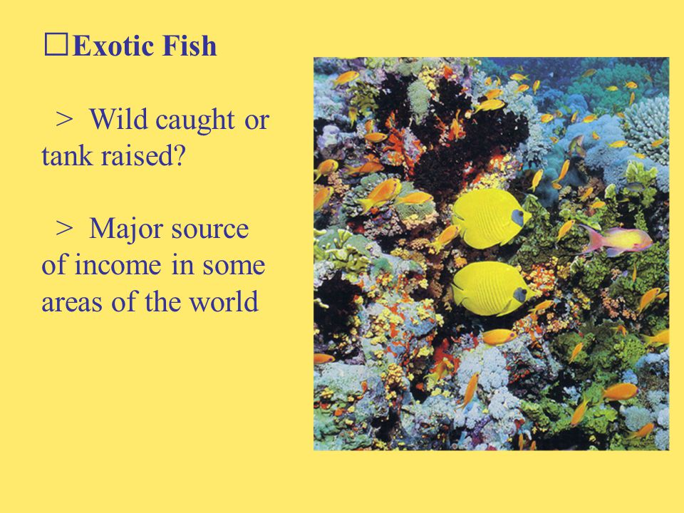 Exotic Fish > Wild caught or tank raised > Major source of income in some areas of the world