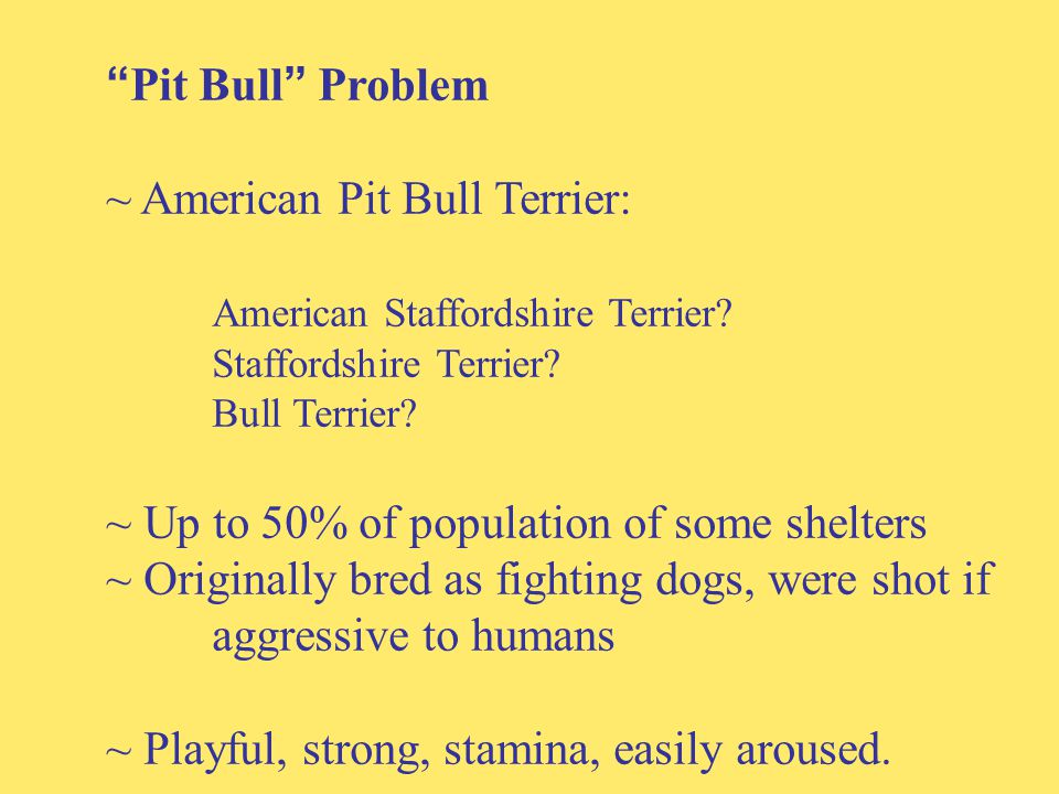 Pit Bull Problem ~ American Pit Bull Terrier: American Staffordshire Terrier.
