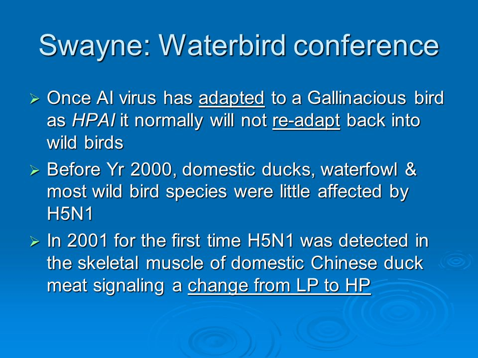Swayne: Waterbird conference  Once AI virus has adapted to a Gallinacious bird as HPAI it normally will not re-adapt back into wild birds  Before Yr 2000, domestic ducks, waterfowl & most wild bird species were little affected by H5N1  In 2001 for the first time H5N1 was detected in the skeletal muscle of domestic Chinese duck meat signaling a change from LP to HP