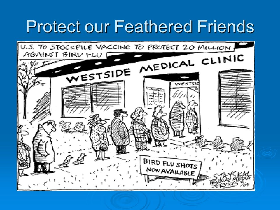 Protect our Feathered Friends