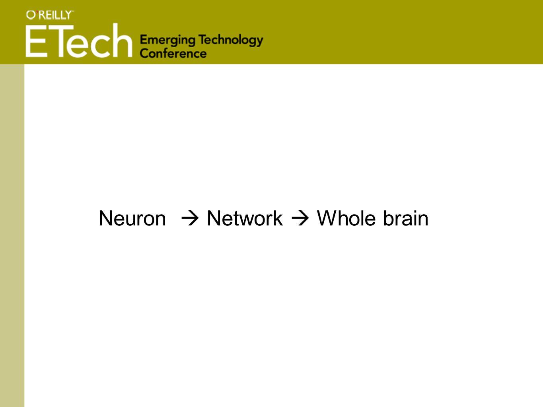 Neuron  Network  Whole brain